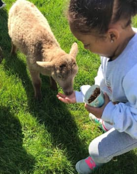 Student feeding a baby goat